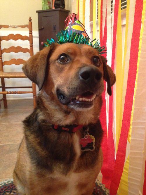 Oliver S Adoption Day Party Adoption Day Adoption Dog Birthday