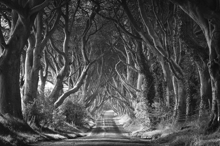 """""""The Dark Hedges"""" by rohan reilly, via 500px."""