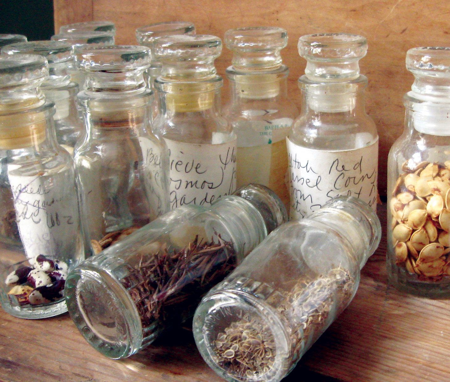 Saving Seeds With Images Seed Bank Storage