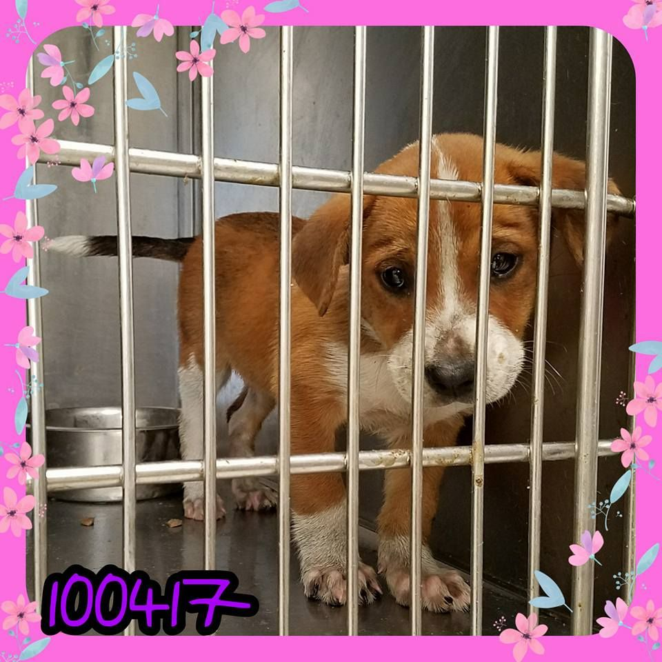 In Kill Shelter Please Clik On Link Laredo Tx Pets Alive