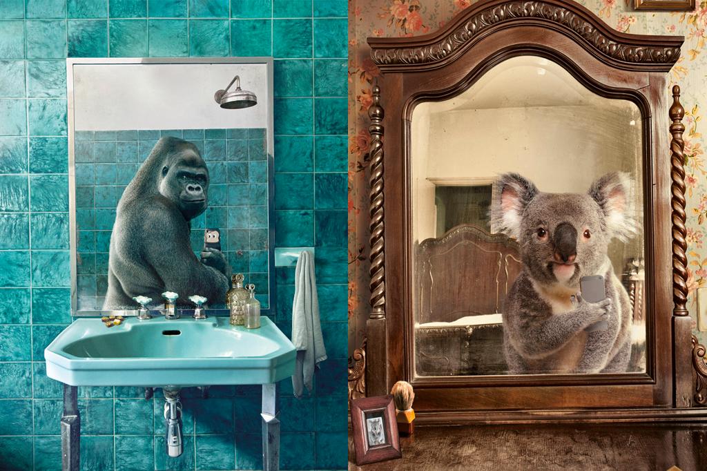 O que é que um gorila faz em frente ao espelho da casa-de-banho
