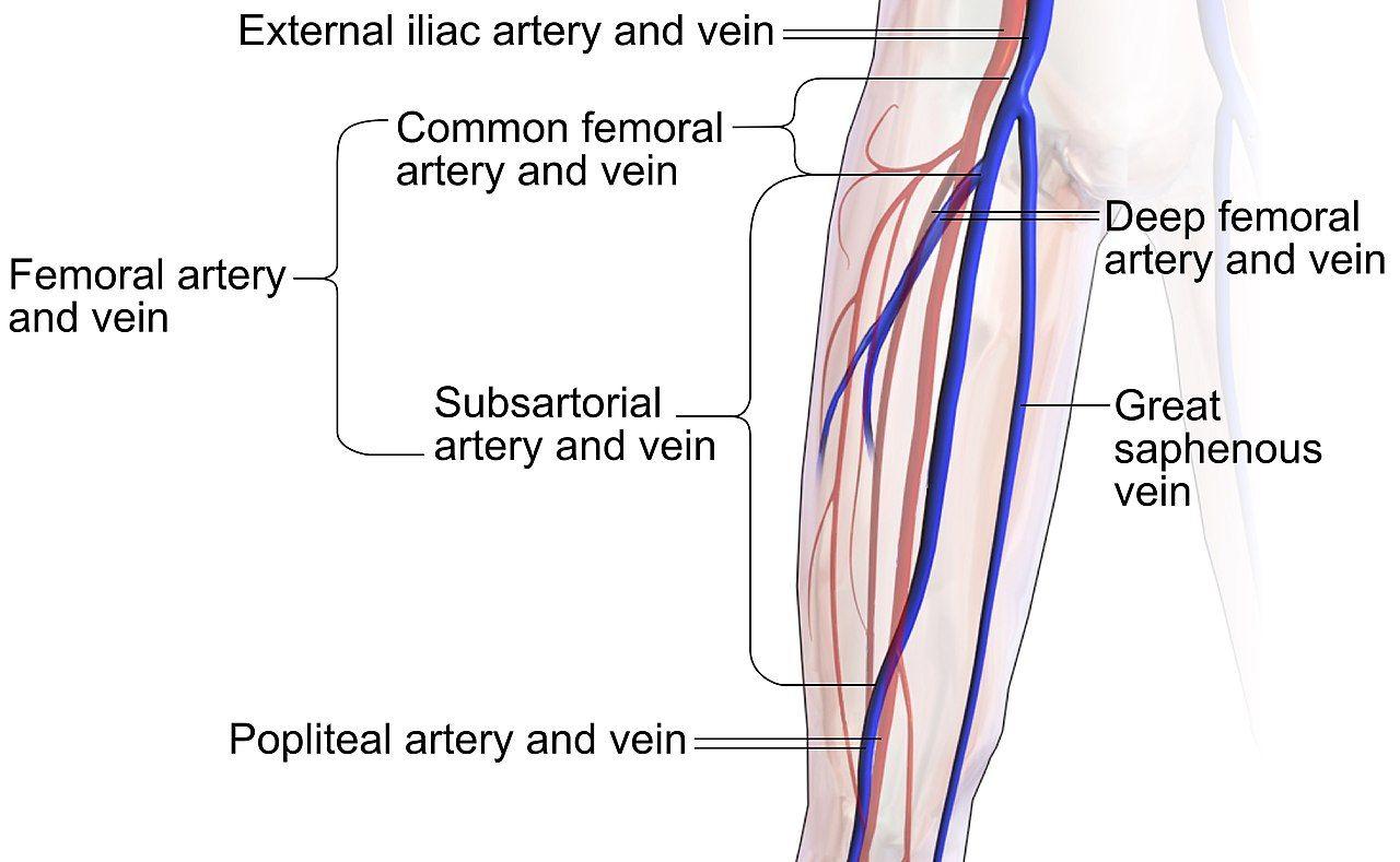 femoral artery in 2020