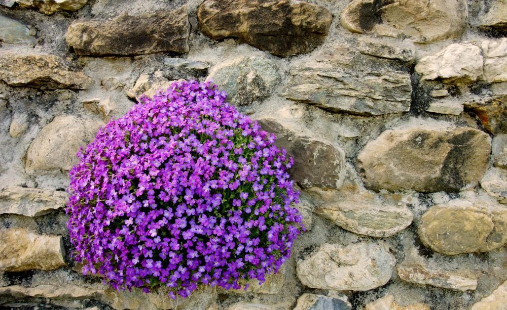 Polsterstauden für Blütenteppiche