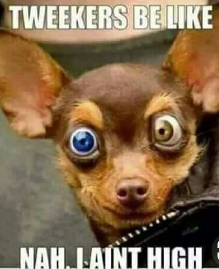 Pin by Ghost on Ha Ha | Funny dog faces, Funny dogs, Funny ...