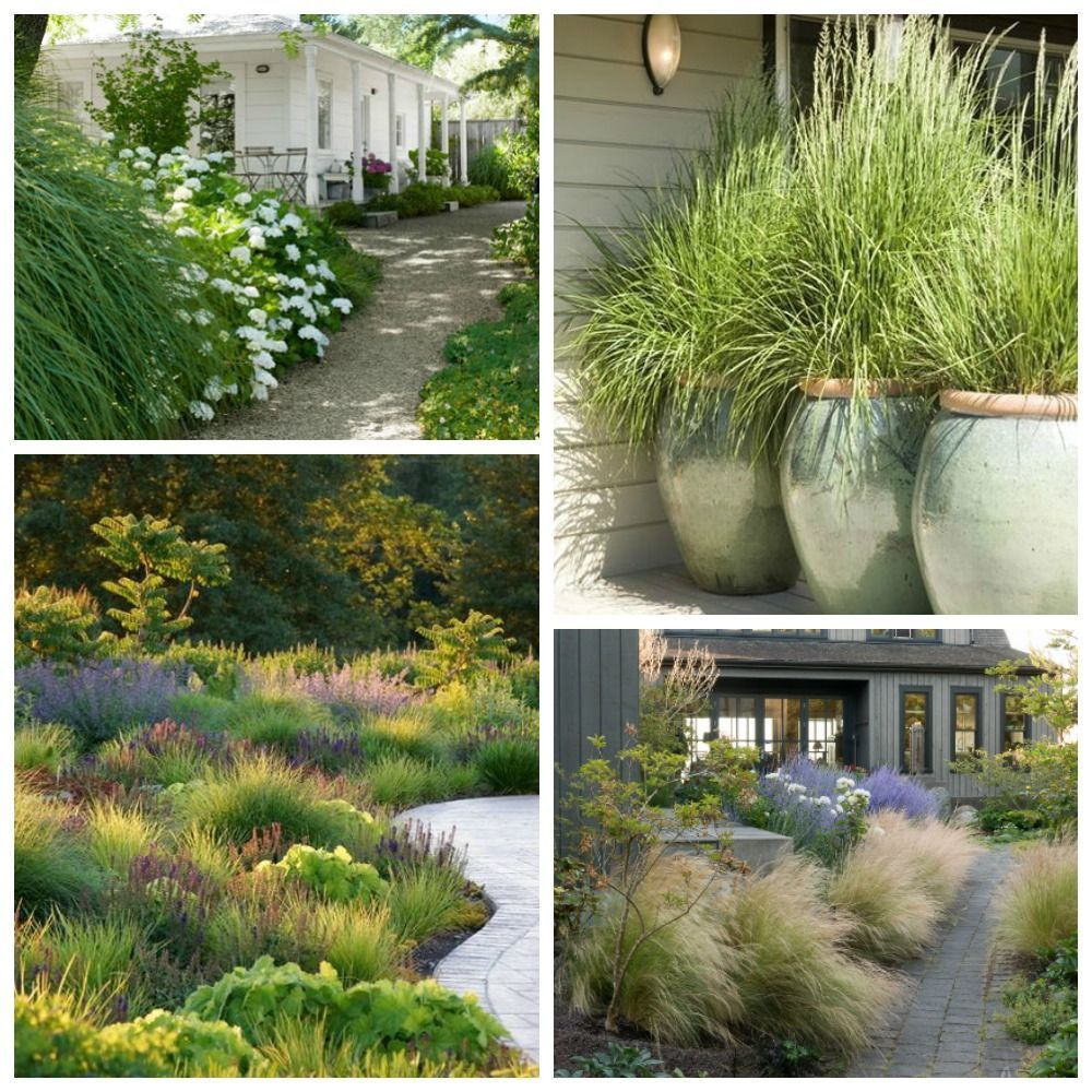 Beautiful Ideas For Landscaping With Ornamental Grasses Used As An Informal Grass Hedge M In 2020 Grasses Landscaping Ornamental Grass Landscape Front Yard Landscaping