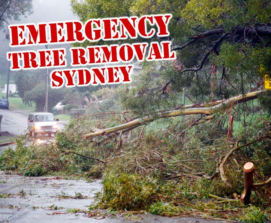 Storm Damaged Emergency Tree Removal Sydney Blog How