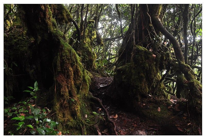 Mossy Forest Dark & Deep Deep photos, Forest