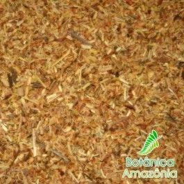 Banisteriopsis caapi - Variedade Caupuri
