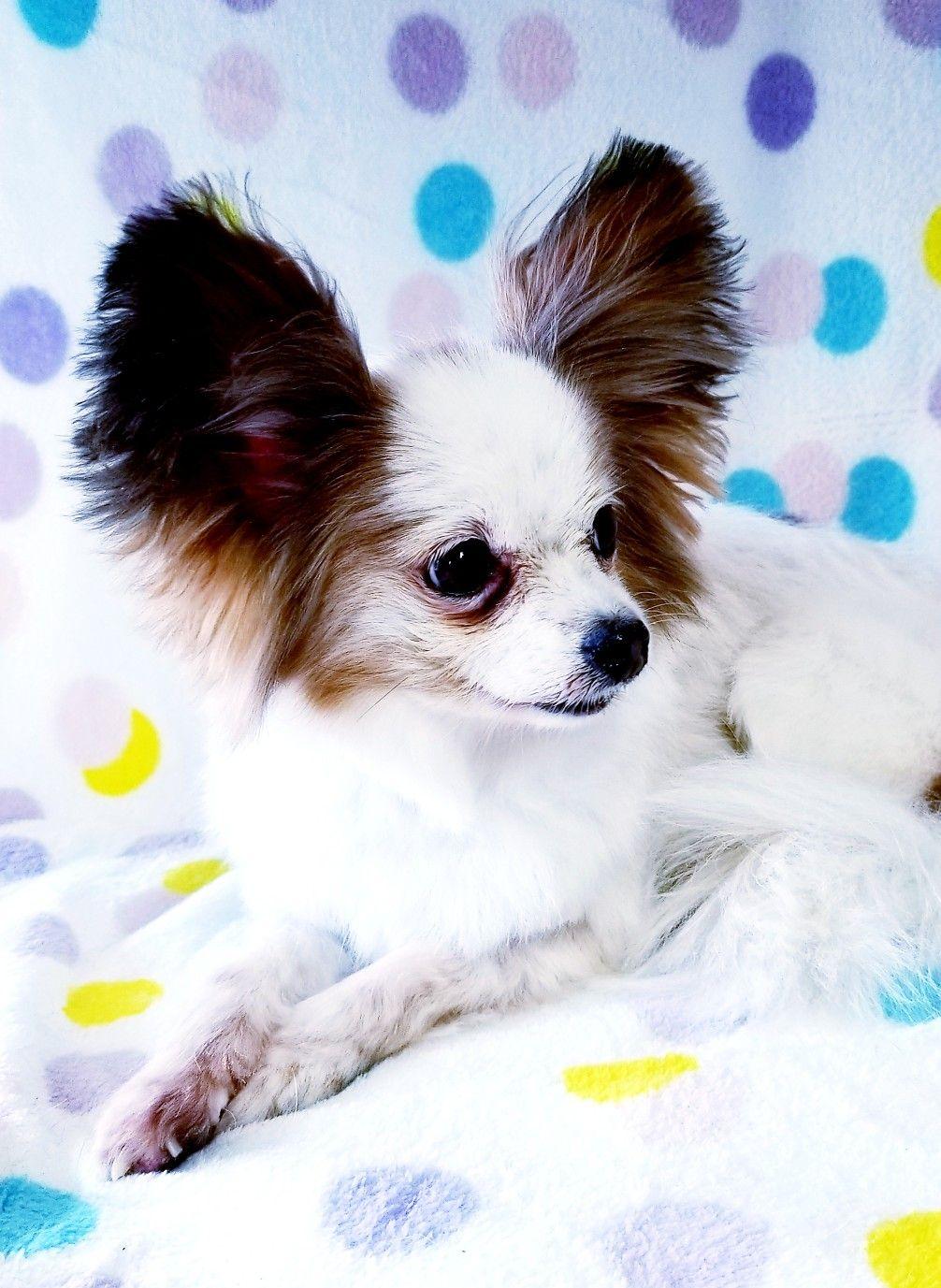 Pin by Carmen Hudson Troyer on Pet Grooming by Carmen