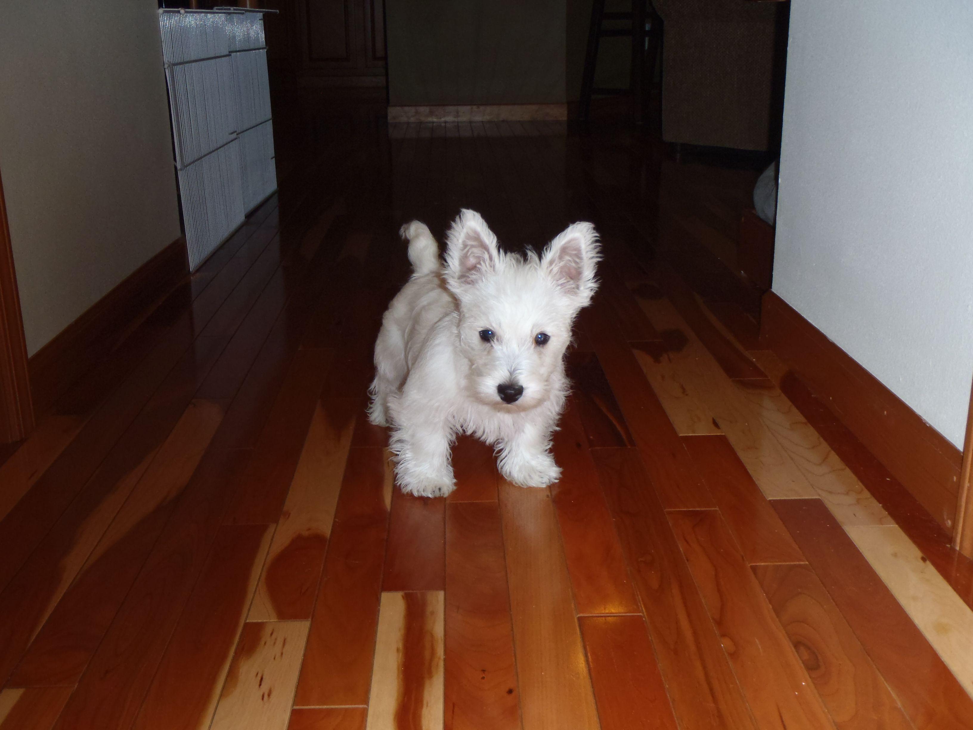 Little Puppy, Big Ears