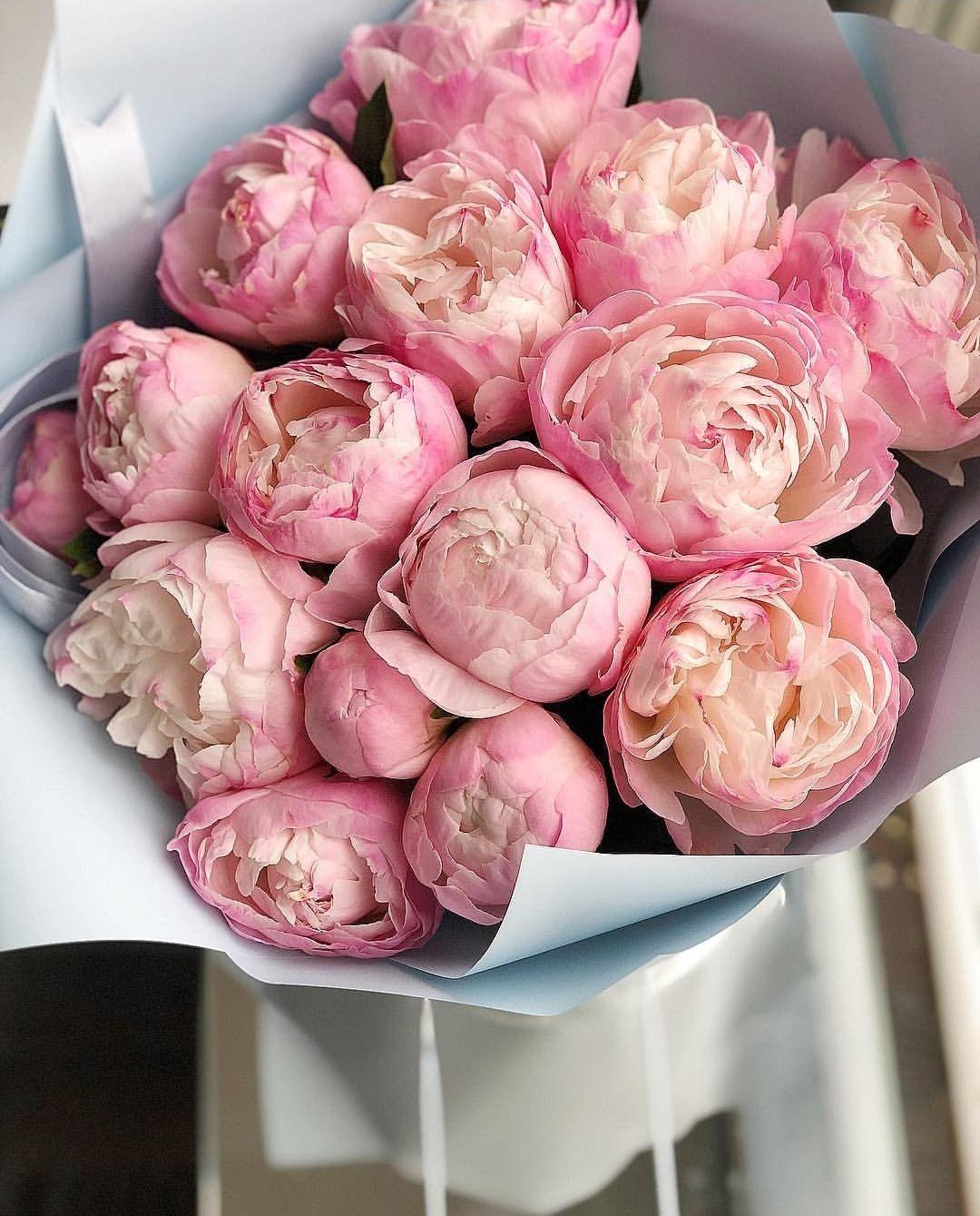 Цветы пионы фото красивые картинки закрепил