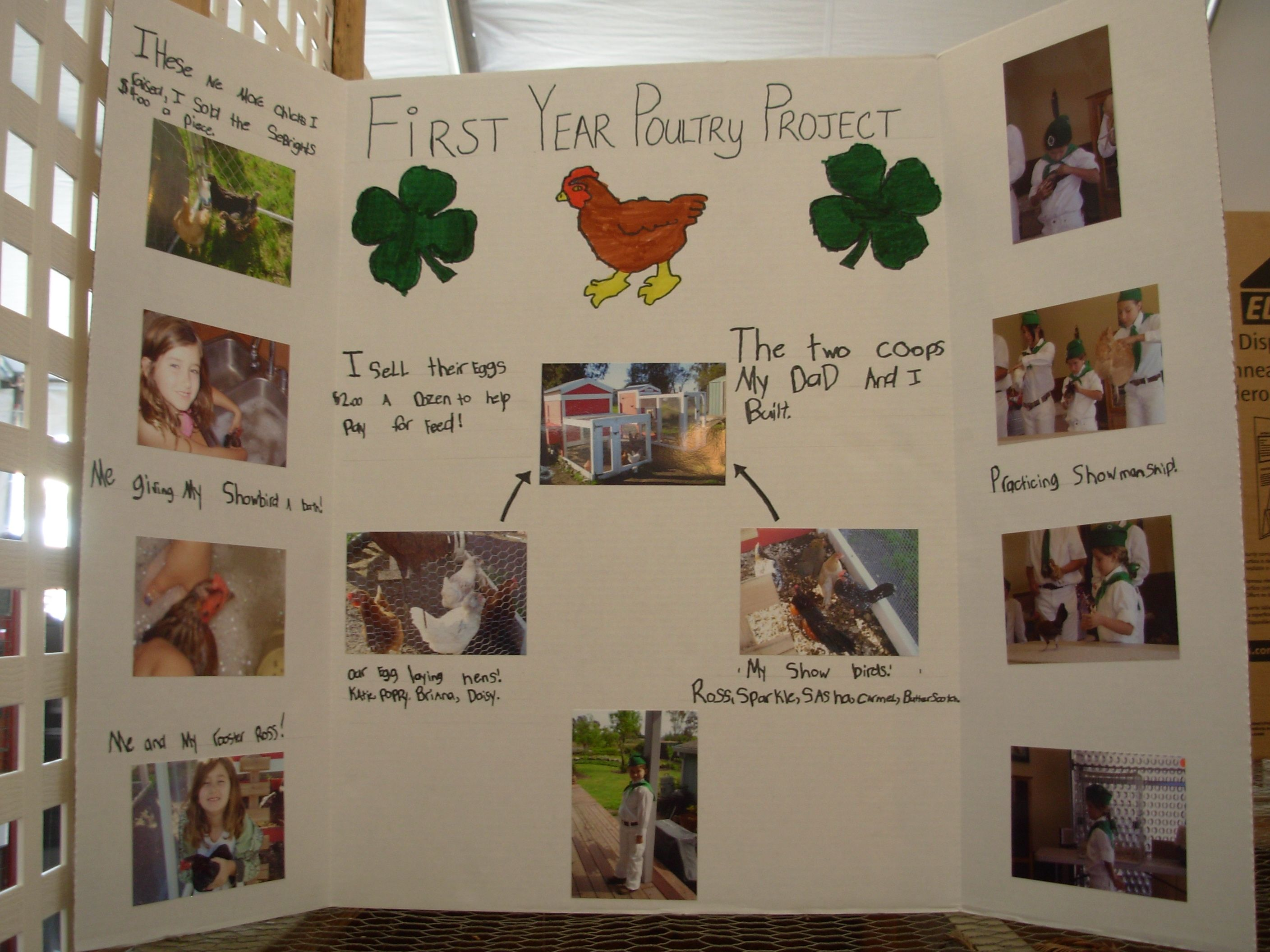 4h Project Ideas
