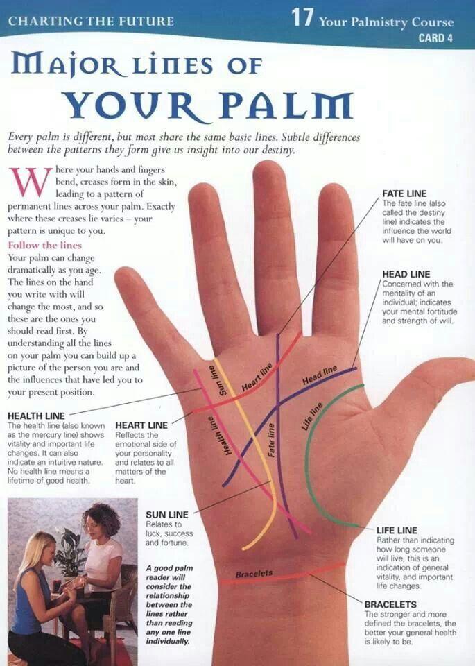 Photo of Palm 1