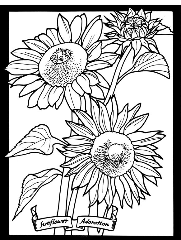 Welcome To Dover Publications Sunflower Coloring Pages Dover Coloring Pages Coloring Pages