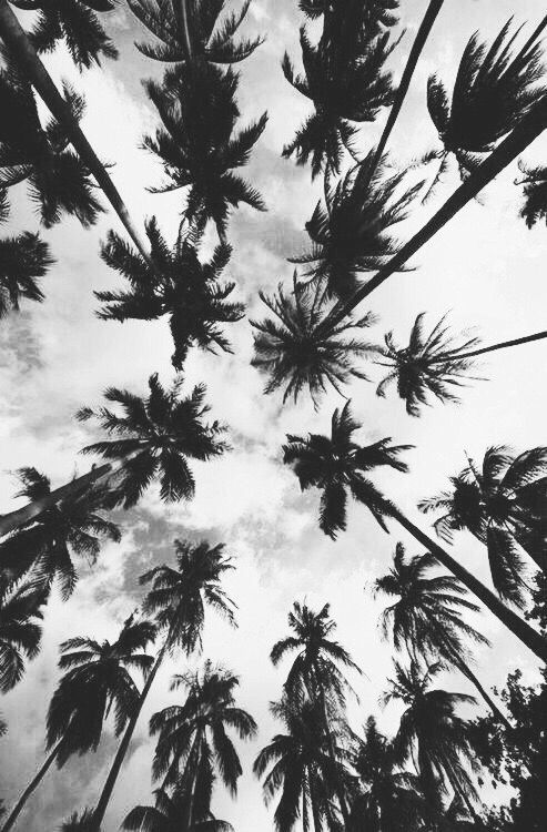 Black And White Tumblr Iphone Wallpaper Tumblr Wallpaper Palm Trees