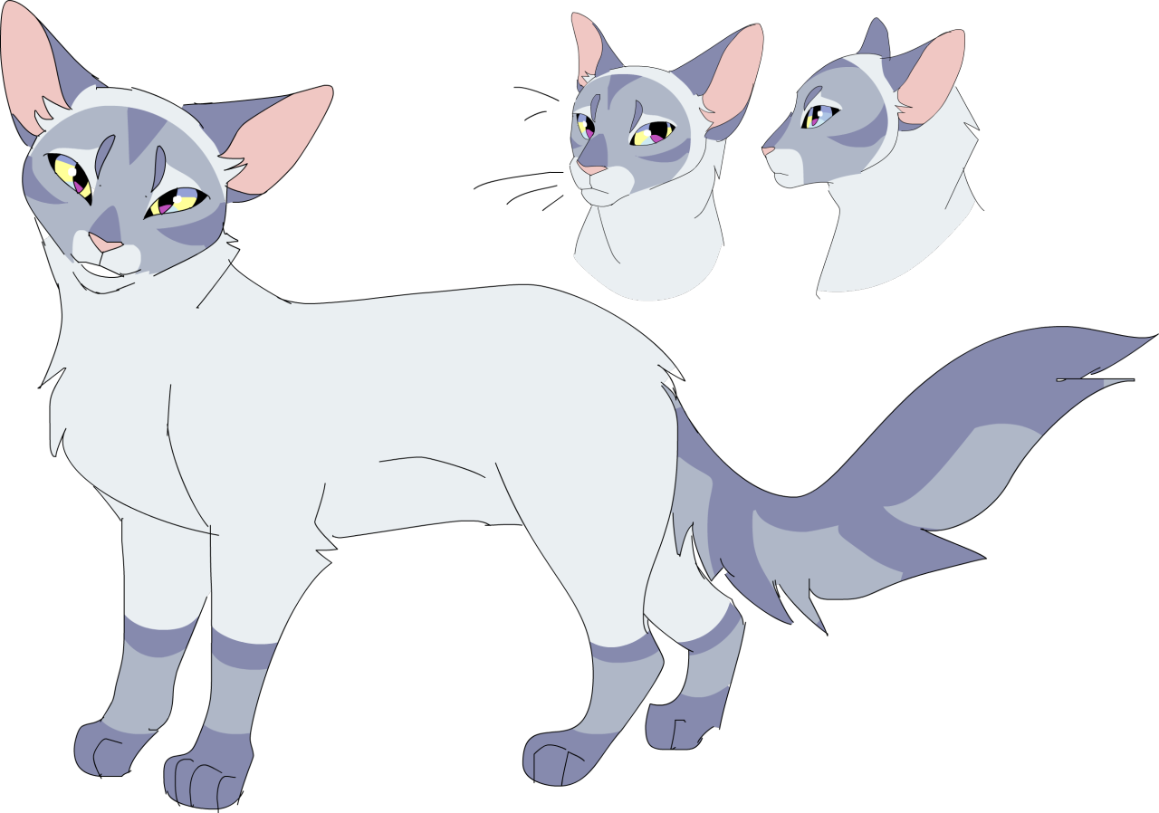 Moonflower Model With Images Warrior Cat Drawings Warrior