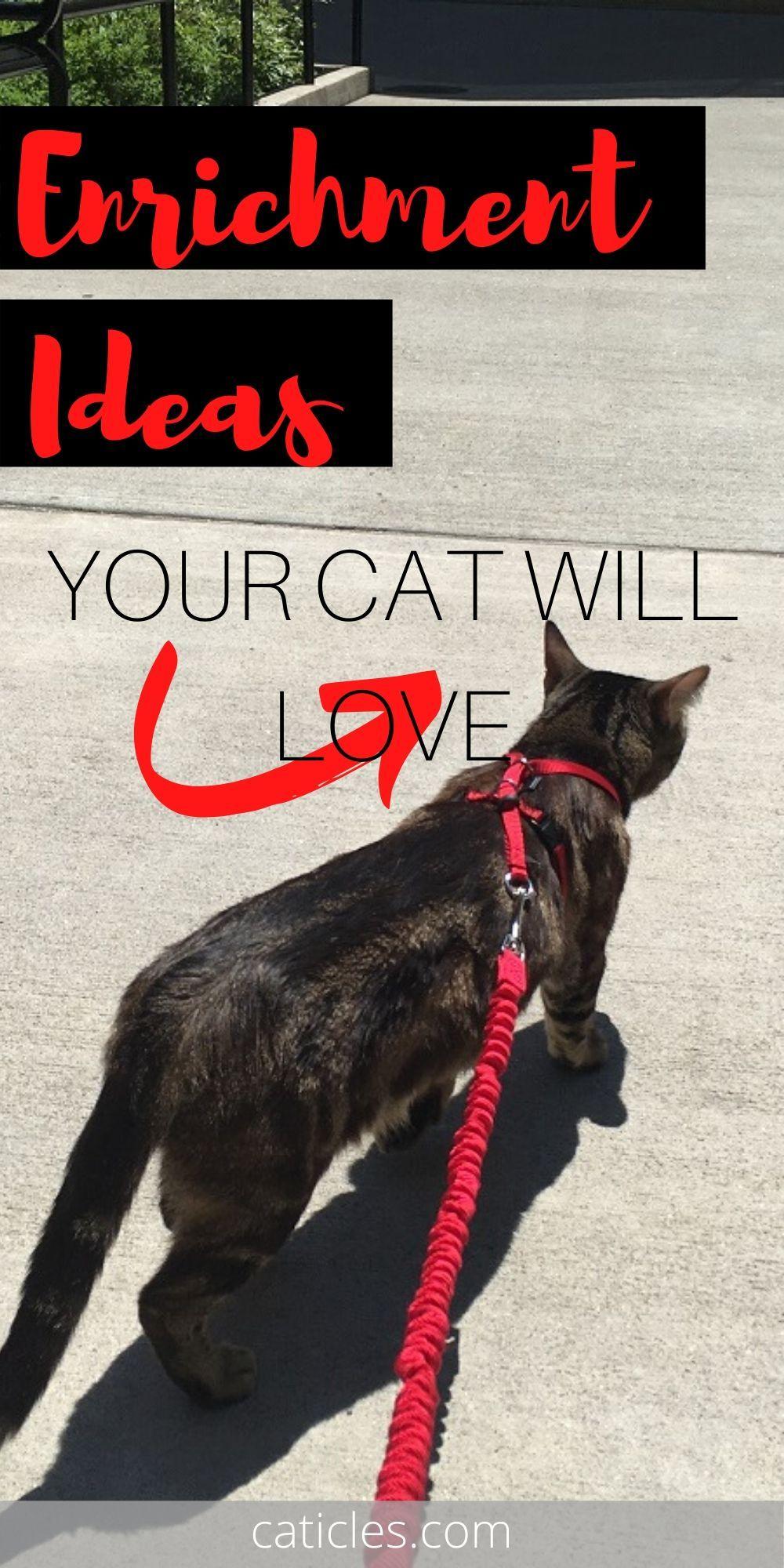 Caticles Mewsletter Free Indoor Cat Happiness Resources In 2020 Indoor Cat Cat Care Cat Behavior