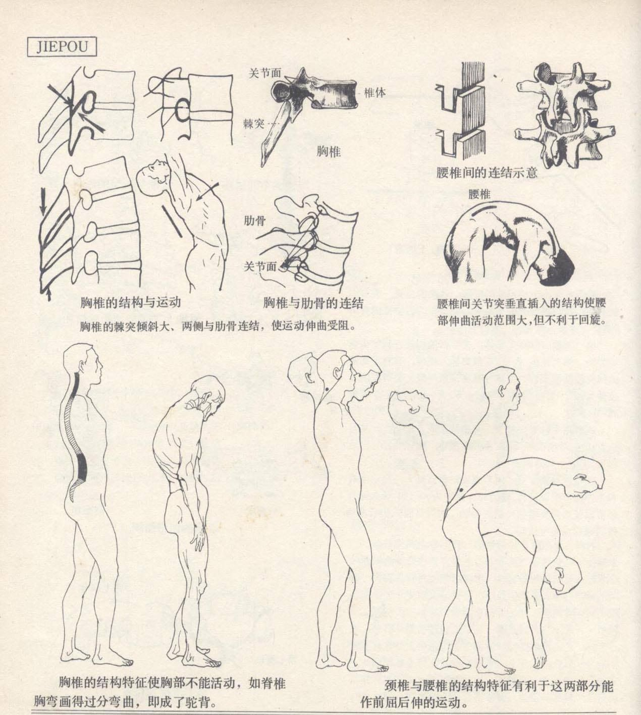 Outstanding Figure Drawing And Anatomy For The Artist Frieze ...