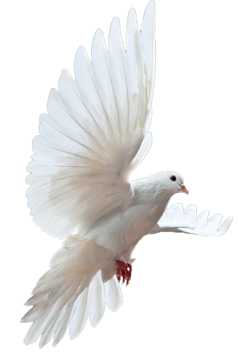 dove with roses png | Dove Png Pictures | deseos de pasion ...