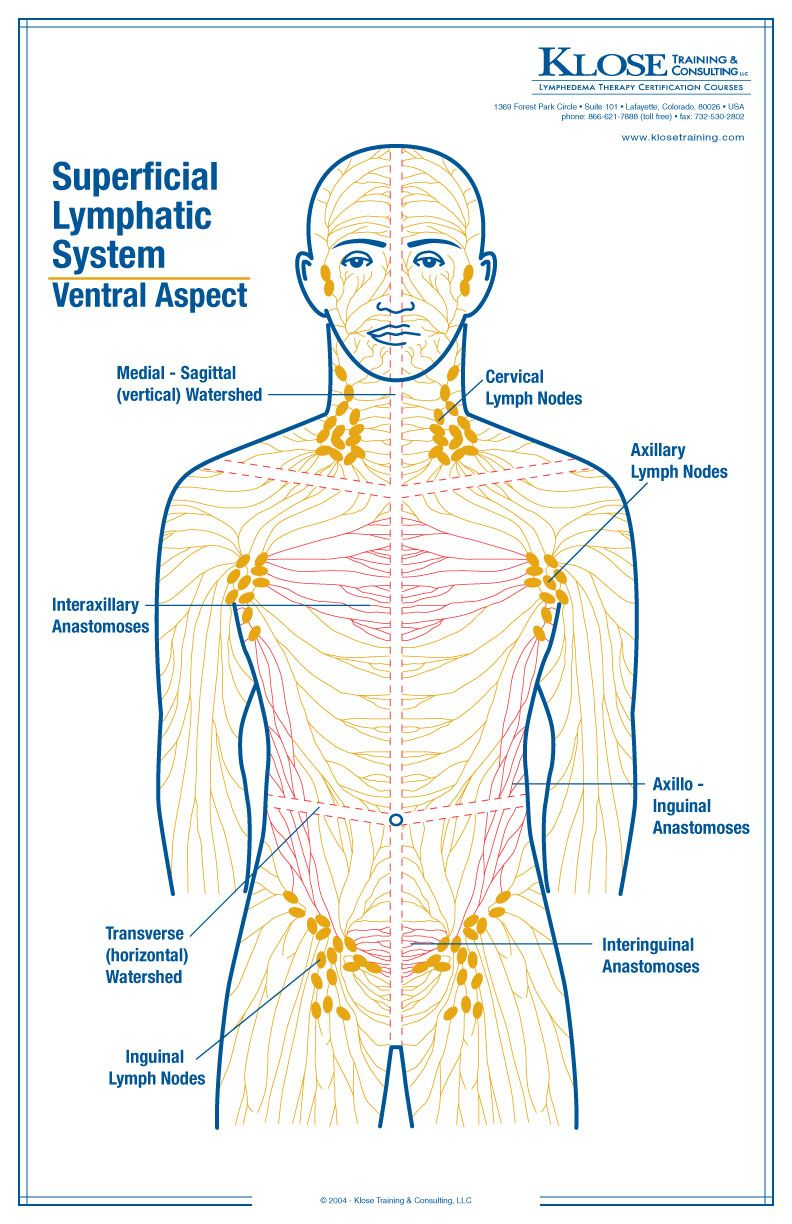 standard treatment of lymphedema manual lymphatic drainage massage rh pinterest com