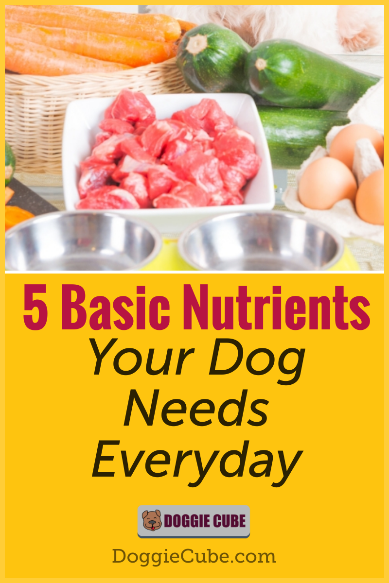 Pin on Dog Nutrition