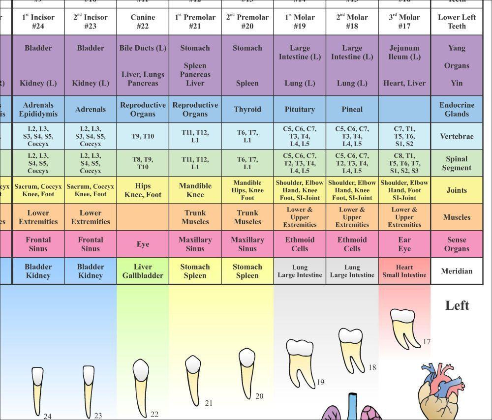 meridian health plan of illinois dental coverage