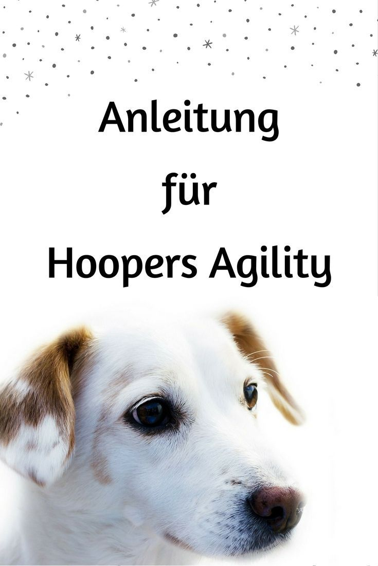 hoopers agility ist auch f r hunde geeignet f r die normales agility nicht geeignet ist es. Black Bedroom Furniture Sets. Home Design Ideas