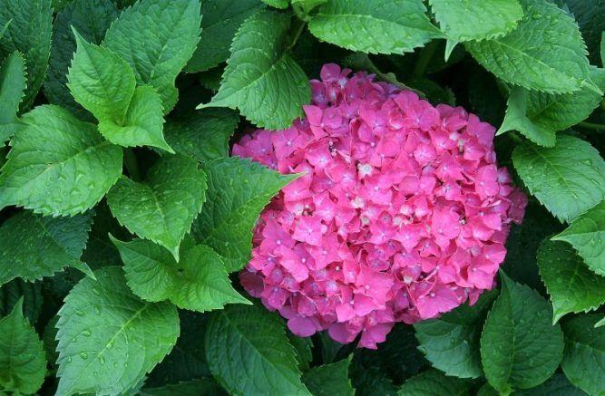 Plantas de exterior para todo el a o resistentes al sol y - Plantas de balcon resistentes al sol ...