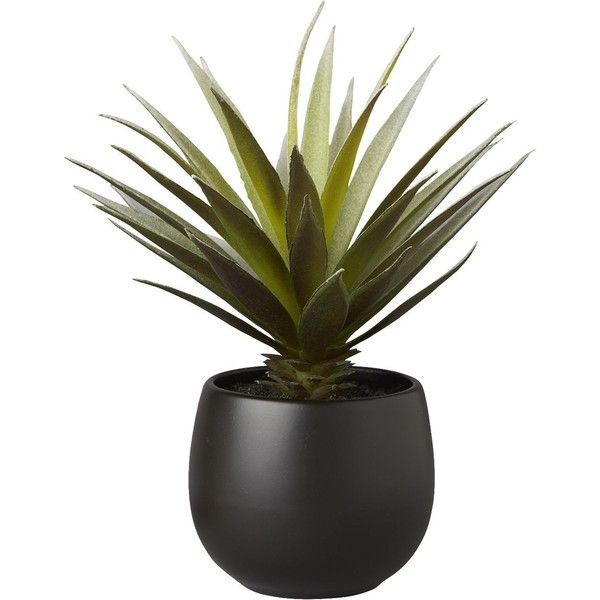 CB2 Potted Succulent With Black Pot (€9,25) ❤ liked on Polyvore featuring home, home decor, floral decor, plants, fillers, decor, black, glazed pots, cb2 and black home decor
