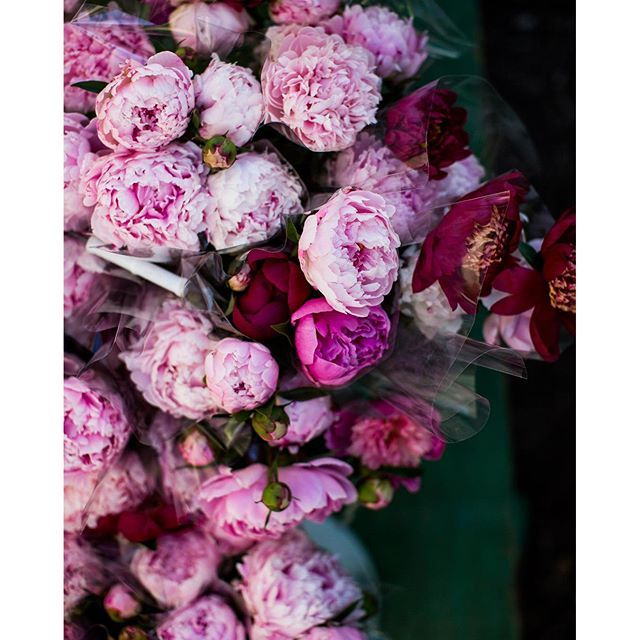 beautiful peonies #peonies