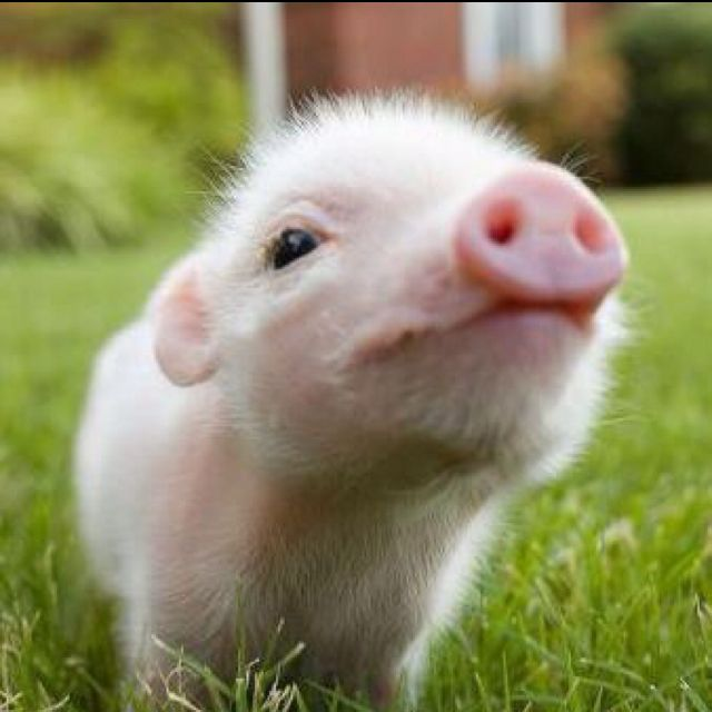 Thank you for being Vegan and not order bacon or pork meat to eat.... =)