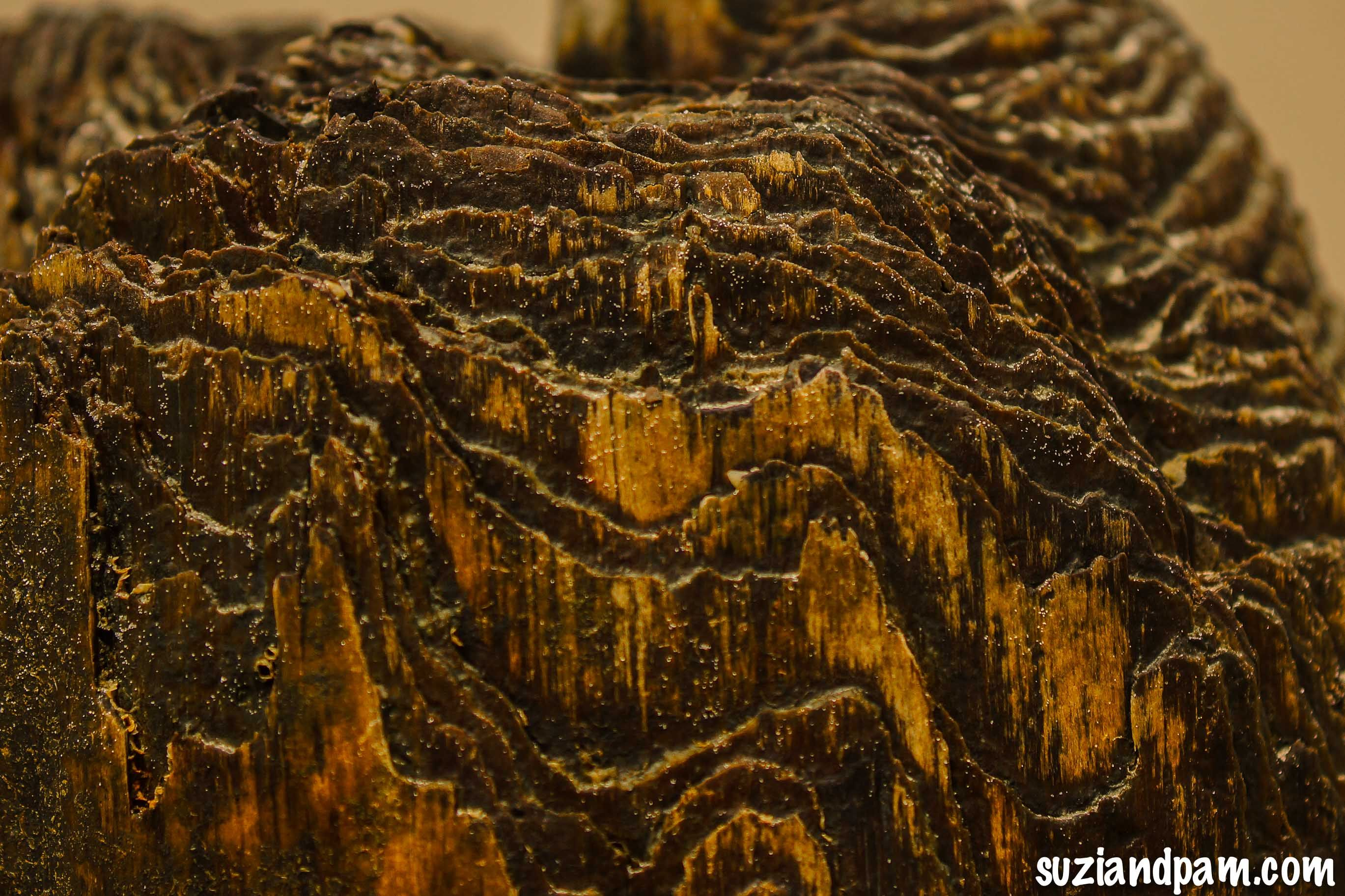 Old Pier Piling in Hampton, VA....get lost in all that texture...