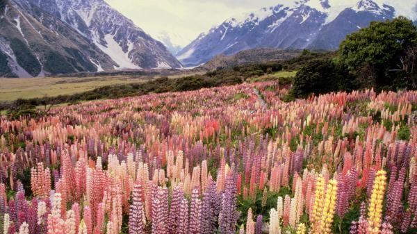 hintergründe berg und blumen  landscape wild flowers