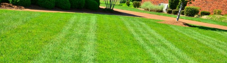 6 Fehler bei der Rasenpflege, die Ihren Garten in Knoxville ruinieren können # care #knoxville #lawn ...#bei #care #der #die #fehler #garten #ihren #knoxville #können #lawn #rasenpflege #ruinieren