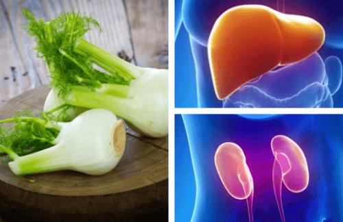 Gut Für Nieren Und Leber