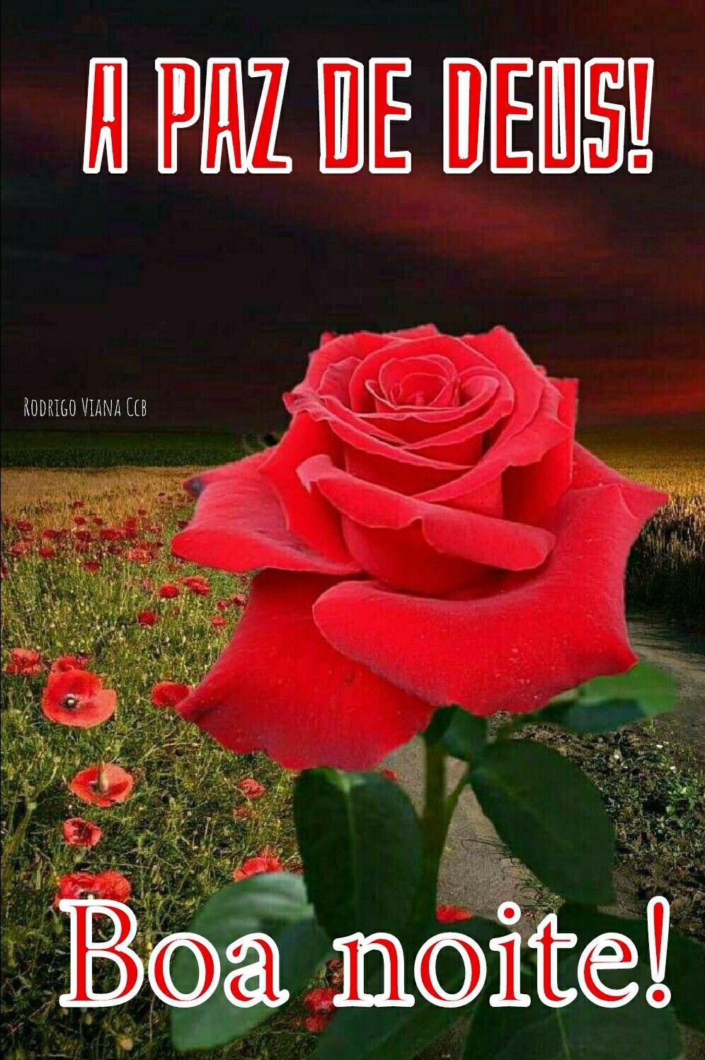 Amém Boa Noite Rosas Brancas Rosas Vermelhas E