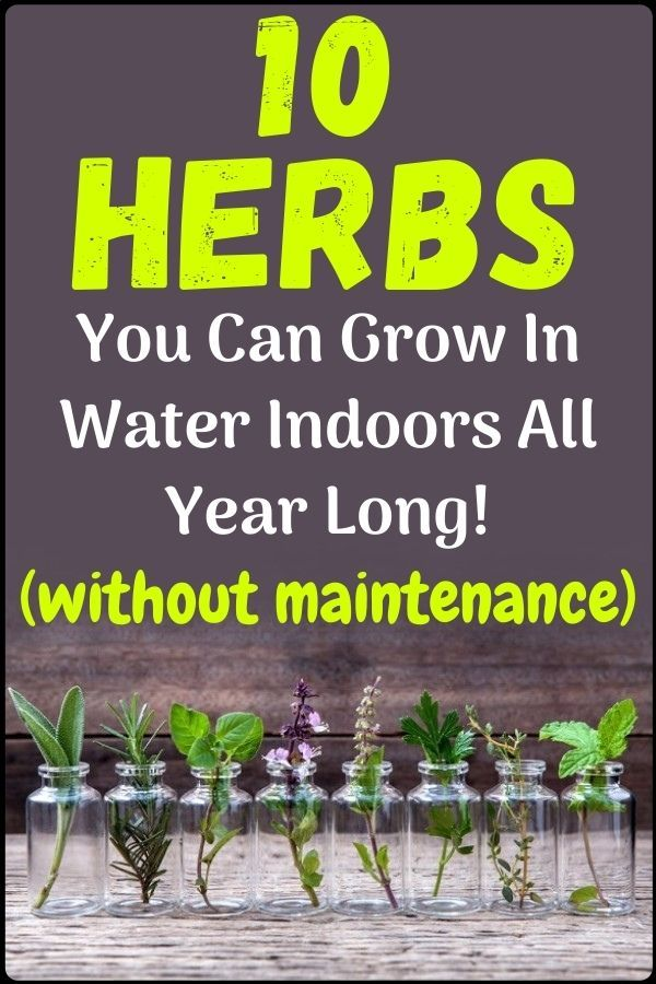 10 Herbs You Can Grow Indoors In Water All Year Long In 2020 Gardening For Beginners Survival Gardening Gardening Tips
