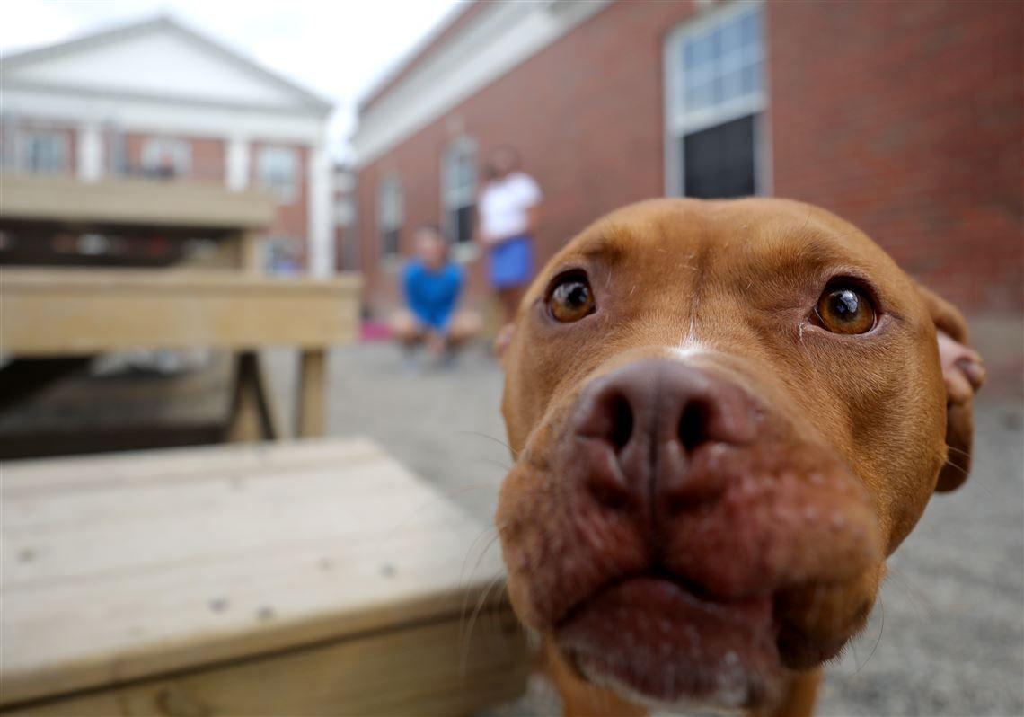 Heat Can Damage Pets Urinary Tract Health Pets Dog Care Dog