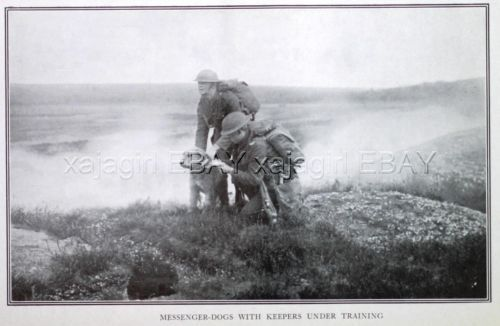 Купить DOG Airedale Terrier Messenger War Dog Battlefield WWI c1916 Antique Print на eBay.com из США