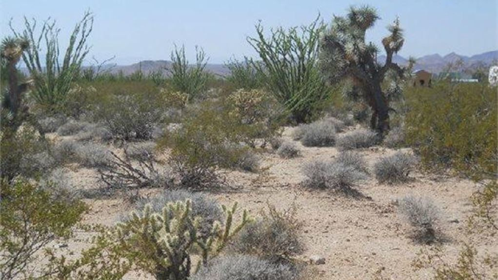 Yucca, Mohave County, West, AZ Homesite For Sale - .59 Acres | land on