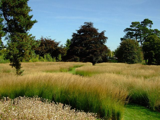 Trentham gardens piet oudolf 39 s rivers of grass grasses for Landscapes in landscapes piet oudolf
