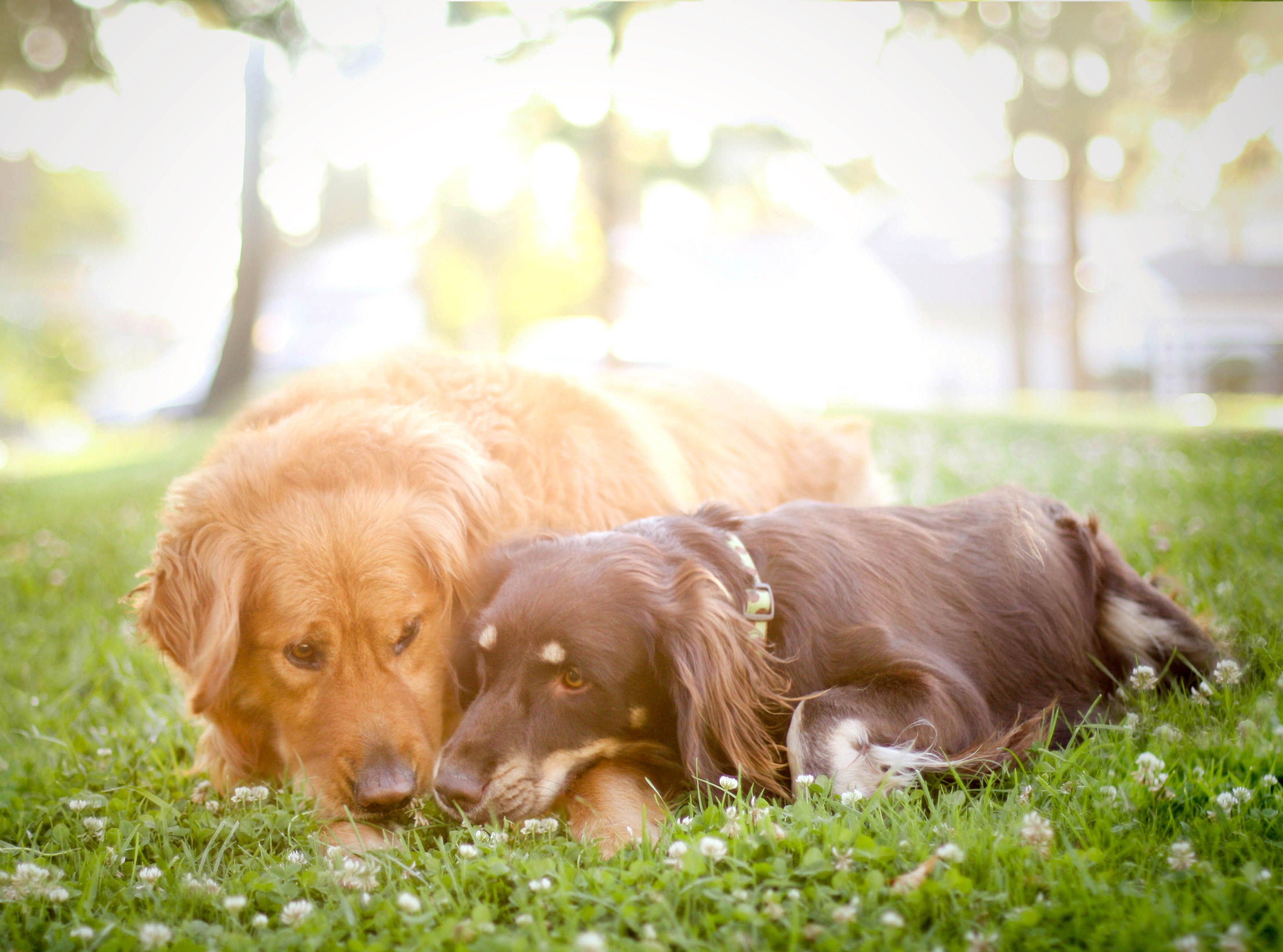 How petsitting could get you a free vacation dogs