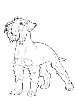 Miniature Schnauzer Dog Coloring Page