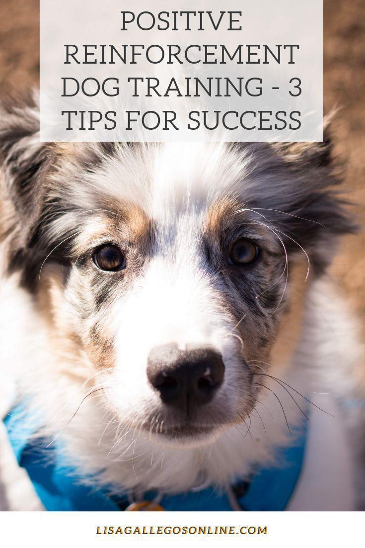 Illinformed dog training roll over dogchowperu