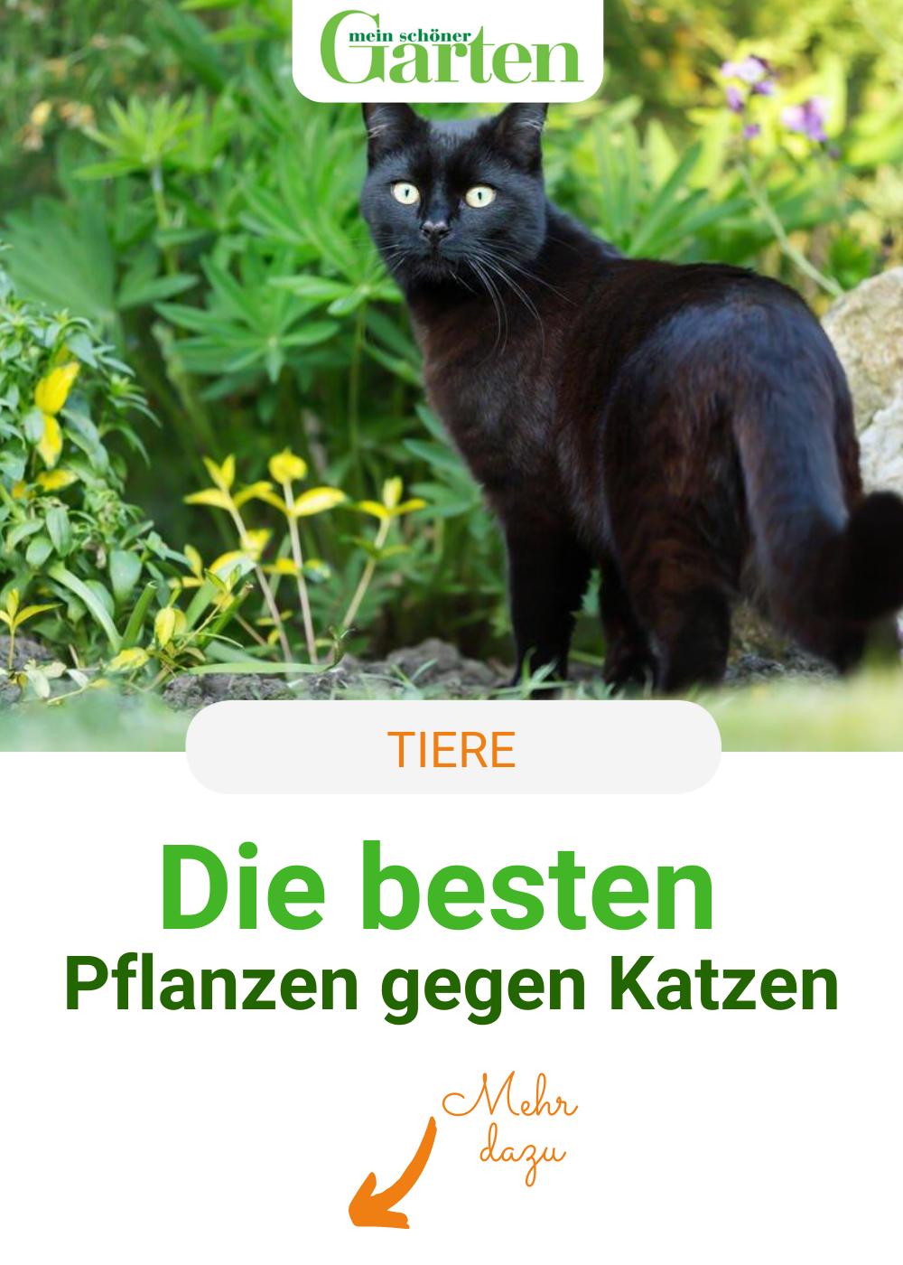 Die Besten Pflanzen Gegen Katzen Pflanzen Gegen Katzen Tiere Katzen