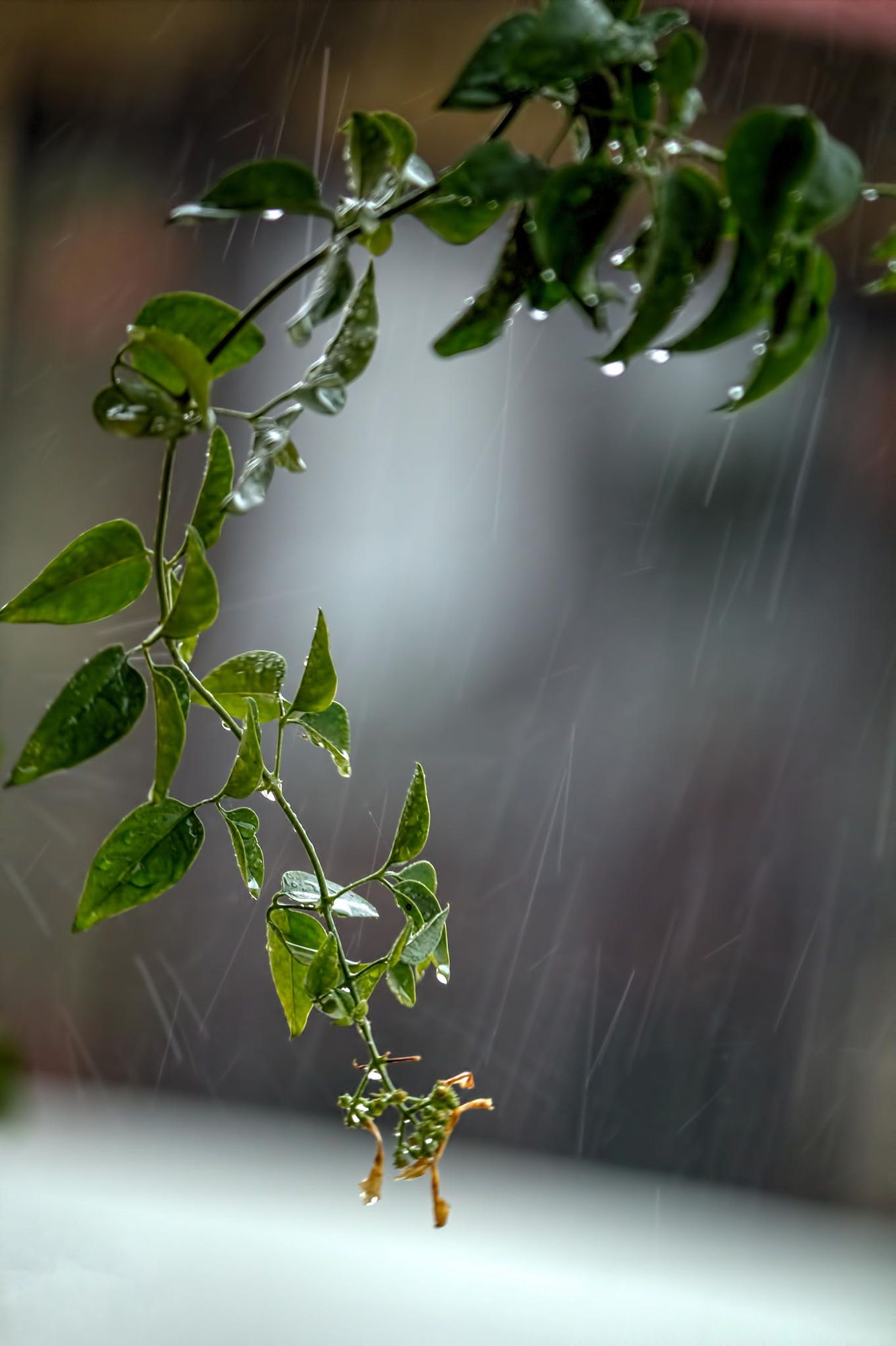 green - plant  - The first rains of the monsoon - photography - Vikas Tripathi