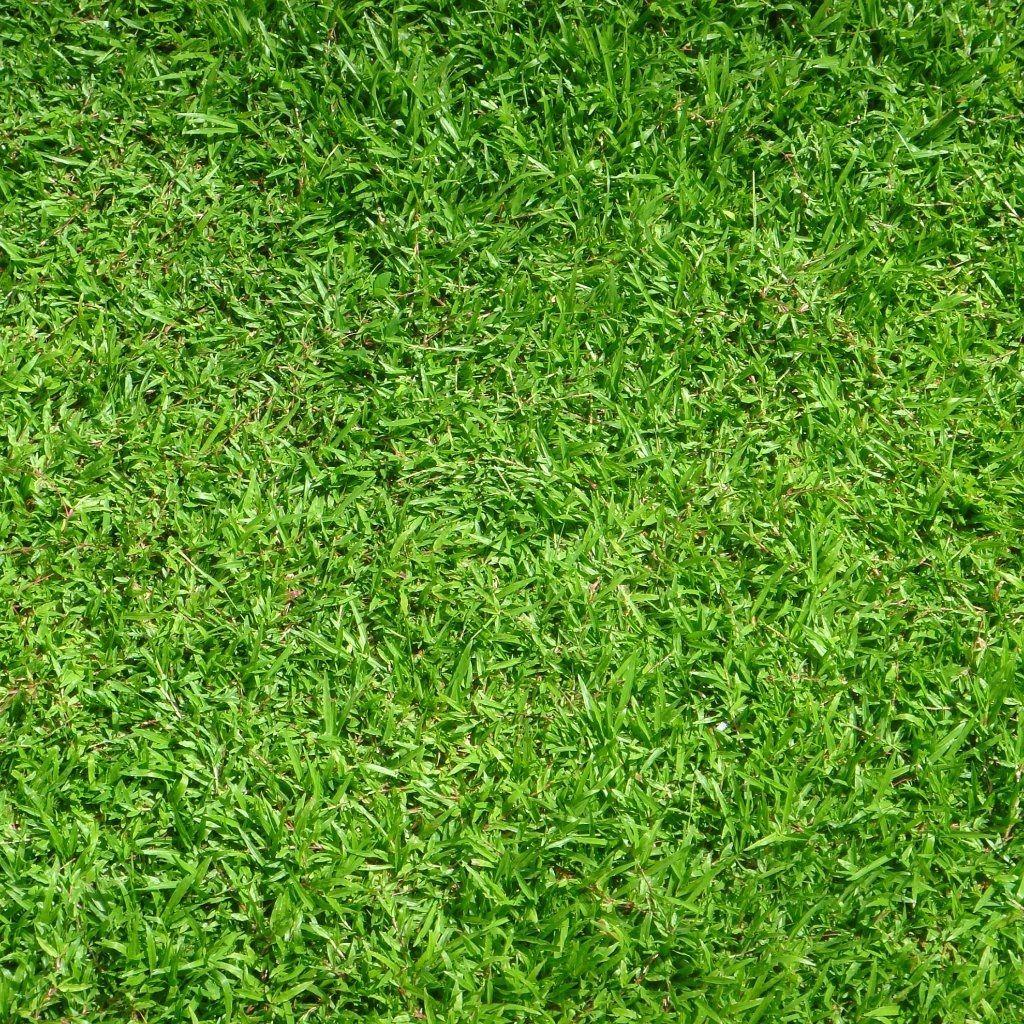 Grass Wallpaper Penelusuran Google