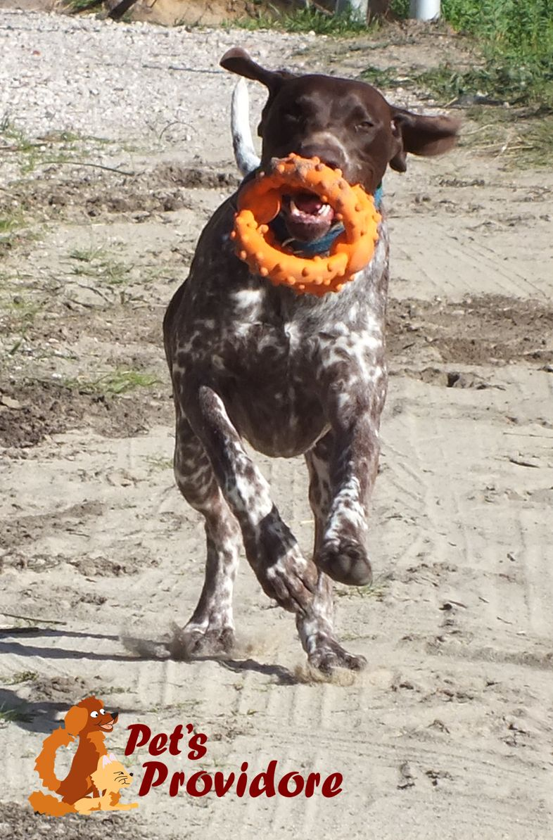 Another Great Idea From Major Dog Easy Roll Easy Throw Easy
