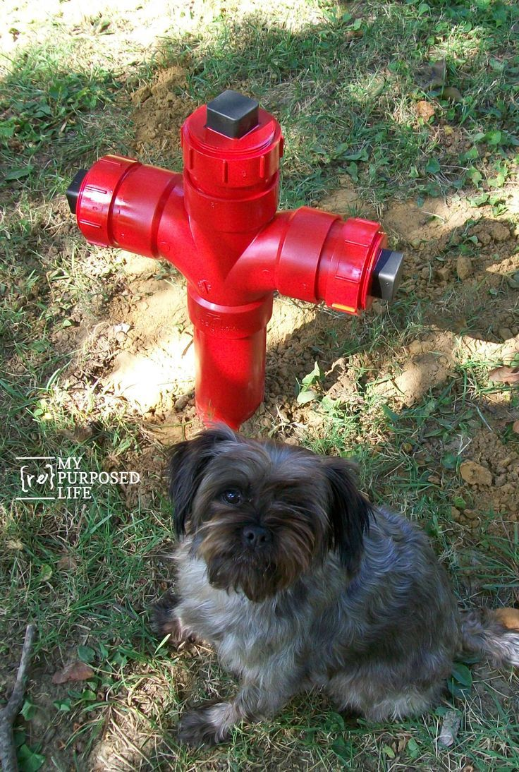 Diy fire hydrant lawn ornaments repurposed and lawn diy fire hydrant lawn ornament my repurposed life solutioingenieria Image collections