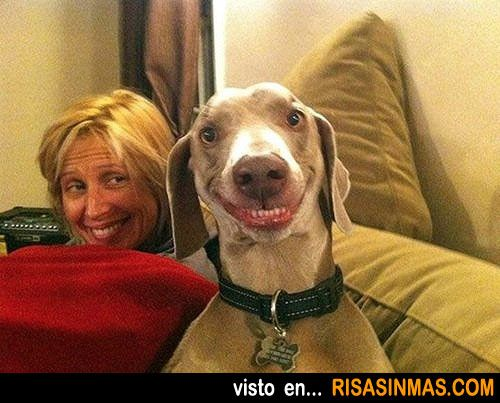 Perro Sonriendo Smiling Dogs Smiling Animals Funny Dog Pictures